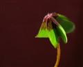 Une simple petite fleur