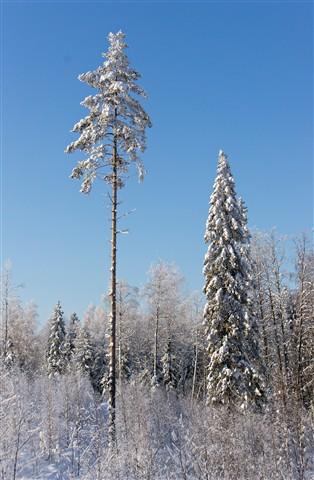 palelevat puut-5n-tam18-200