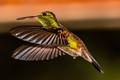 HUMMING BIRD TAKEN WITH FLASH