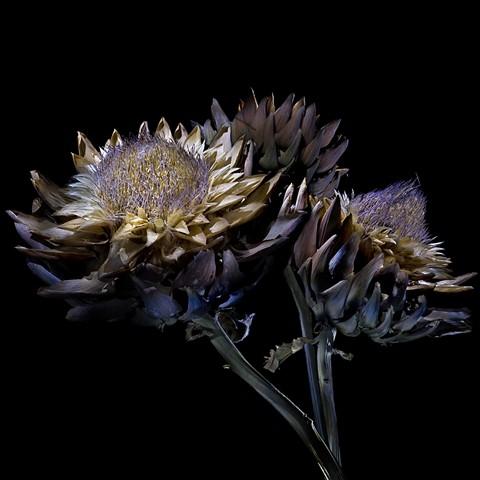 dpreview_flower