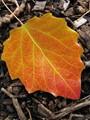 Autumn in Daylesford