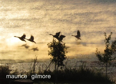 Geese TakeOff over Lake Henry