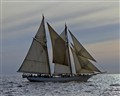 Schooner, Commercial Crop