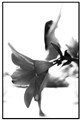 Ballerina Flower DRESS