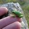 FZ150 Frog