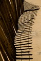 Zebra shadows