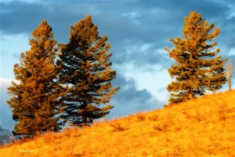 Hillside Spruce Orton
