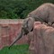 elephant stretching