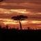 Kruger National Park Sunrise