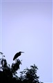 silhouette of an egret