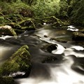 Golitha falls, UK
