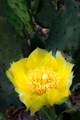 Desert Bloom
