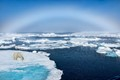 polar bear walking along ice floes in arctic ocean above svalbard norway, with ice rainbow superimposed over the scene