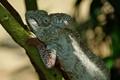 Perinet Reserve, Madagascar