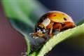 Home Ladybug's Snack Time