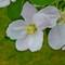 Blossum #1