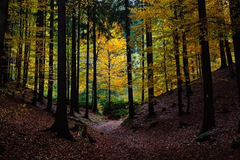 Fall Foliage on the Roman Road (#2)