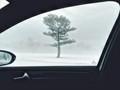 A tree through my car window on a foggy morning.