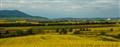 DSC_0295 prairie