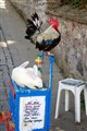 The one about the Rooster and the Rabbit