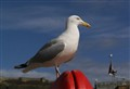 scarborough gull