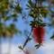 Longbeach trees