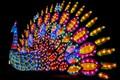 Peacock Lantern-0680