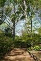 Garden Of The Woods