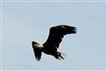 Eagle's Glory