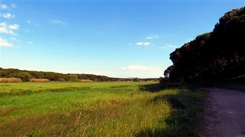 Lagoa fields