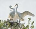 Nest Buillding