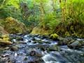 Wahclella Falls Stream