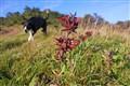 Montana de Oro flower