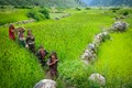 Green of Nepal