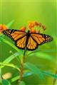 butterfly_9628