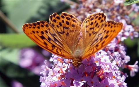 Il posto delle farfalle