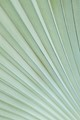 grey palm leaf