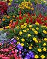 Potpourry of colours