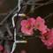 karls.2017.08.26-1.d750.and.em1.2.aircon.flower.K8261920