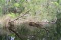 Noosa Heads Everglades, QLD (Australia)