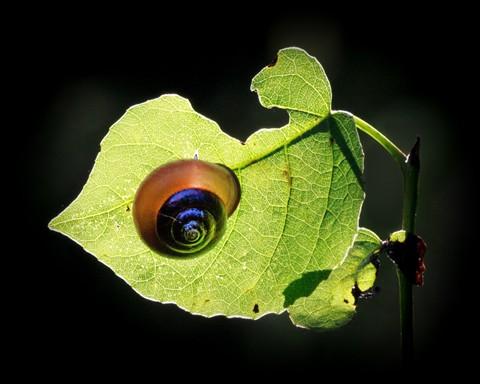 Sunbathing Snail2