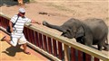 elephant show-Tug of war
