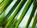 Palm in Austria