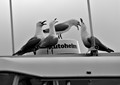 The Autohelm Quartet ( Red Bill Seagulls) tuning up for a song in the marina in Tauranga, New Zealand.