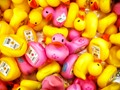 A Bunch of Rubber Duckies