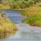 Myakka River-1020719