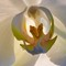 orchid1_4web