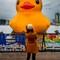 yellow duck small