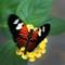 Butterfly 04: OLYMPUS DIGITAL CAMERA