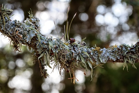 lichen-bokeh